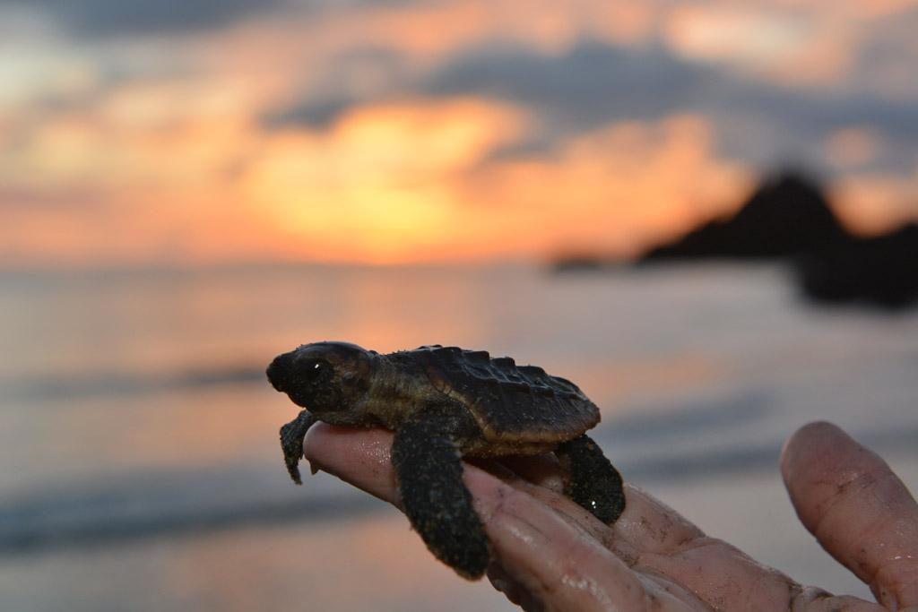 Turtles At Cape Hillsborough National Park Travel
