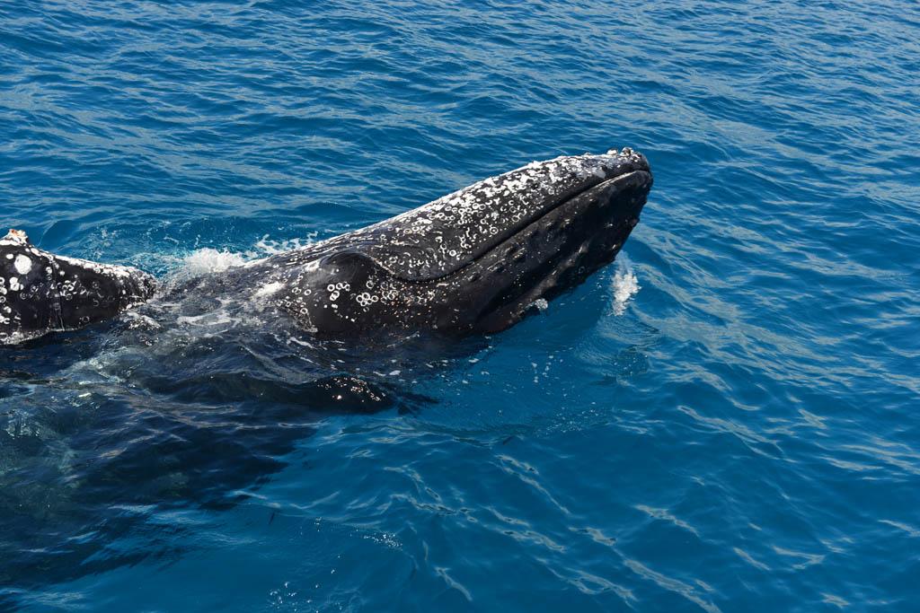 playful-whale