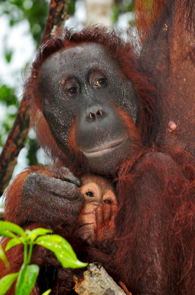 Gina and her baby Gam