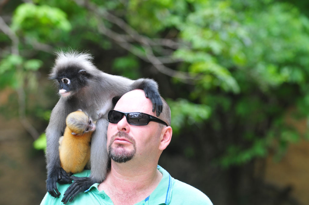 dusky monkeys sit on shoulder