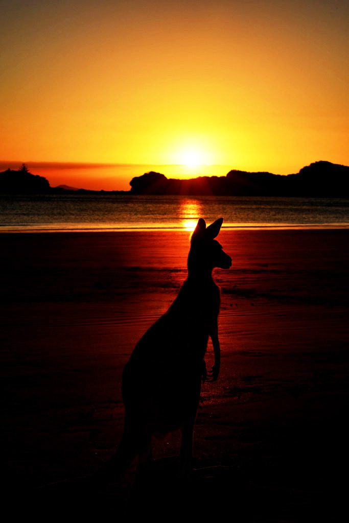 Cape hillsborough sunrise
