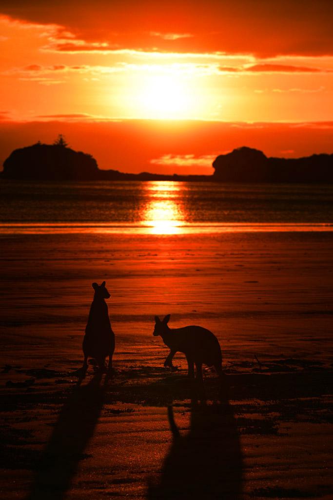 Cape Hillsborough With The Kangaroos Travel Photography