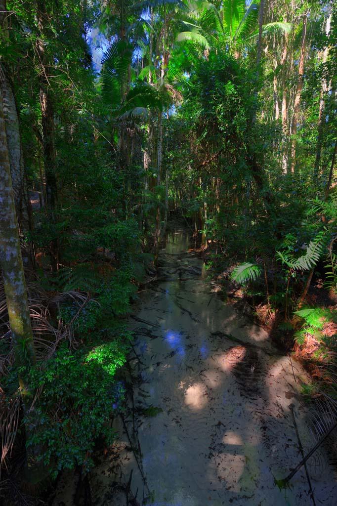 crystal clear rainforest