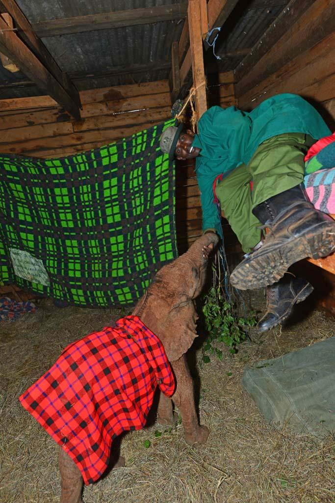 elephant and keeper at nairobi elephant orphanage in kenya
