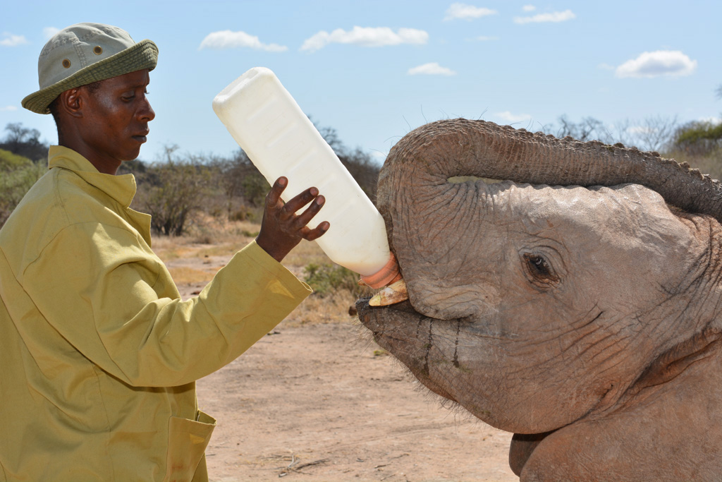 Keeper Richard and orphan elephant Garzi at Ithumba