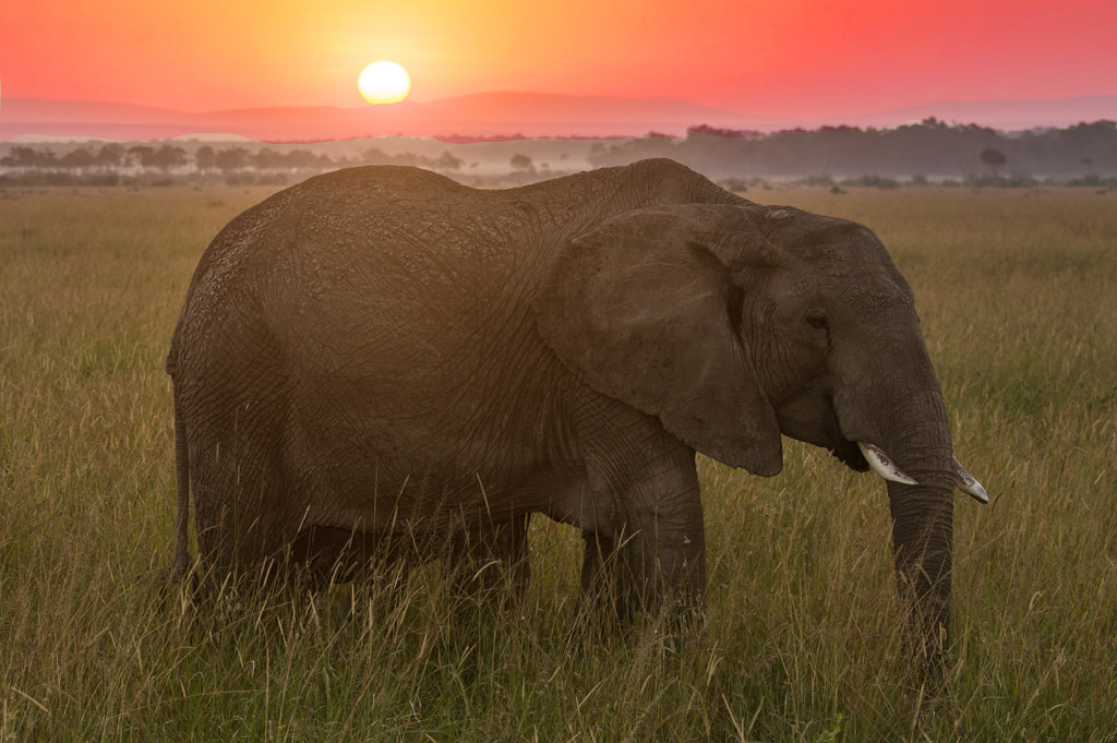 elephant-at-sunrise