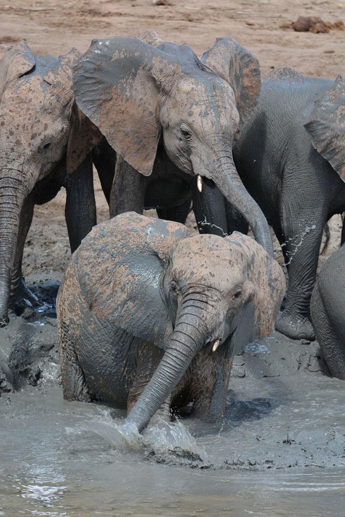 elephant bath time at ithumba