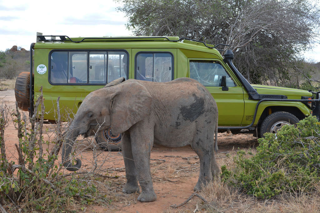 our landcruiser and a baby elephant in Kenya 1