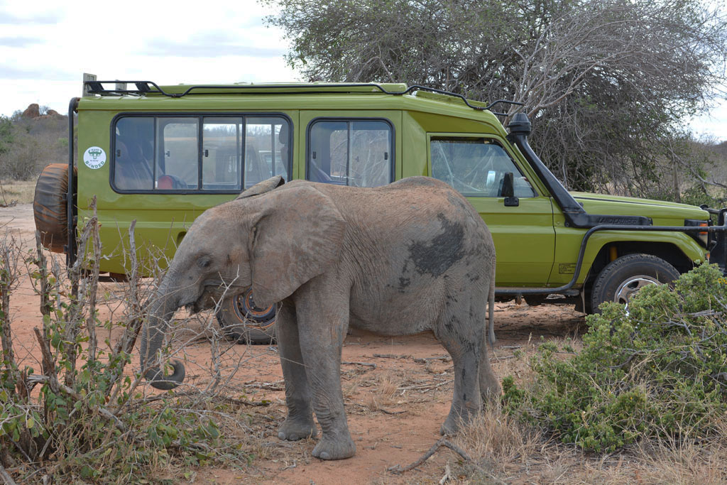 our landcruiser and a baby elephant in Kenya