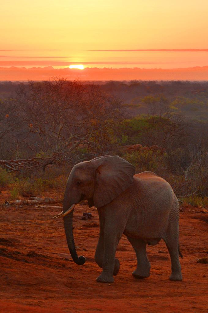 sunrise at ithumba