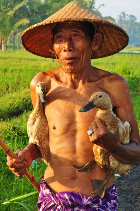 Bali Duck Farmer and his beloved ducks