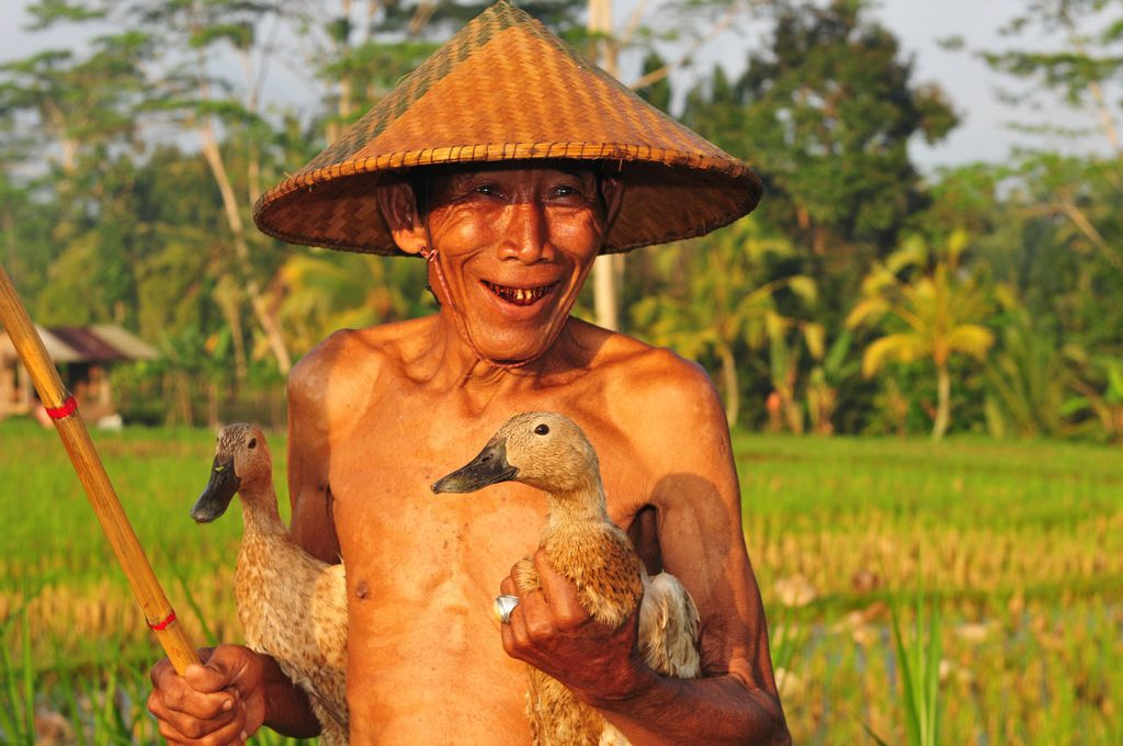 Bali Duck Farmer