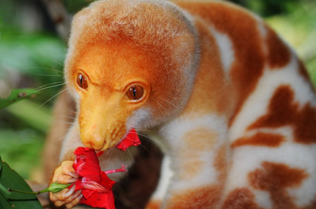Cuscus is native to Papua New Guinea