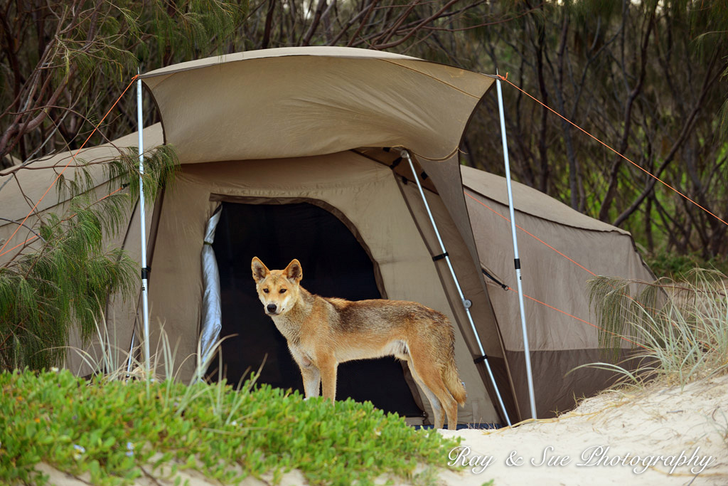 Fraser Island Camping Permits Cost