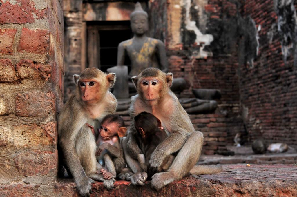 Prang Sam Yot Temple Lopburi
