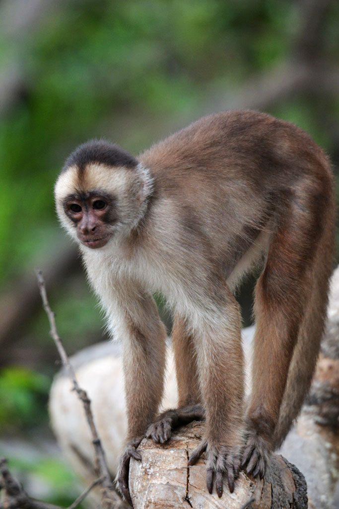 Amazon Rainforest Animals Discover Peru