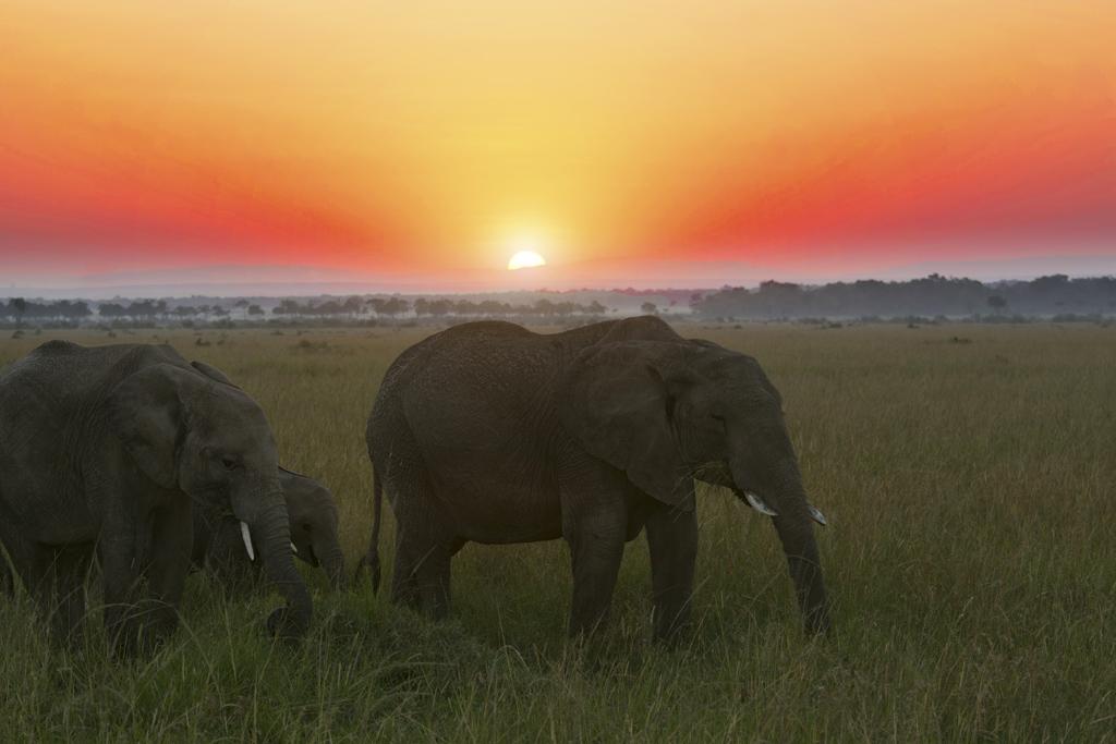the best masai mara sunrise