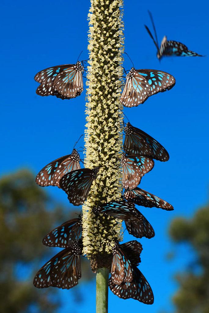 Butterflies on the chance bay walk
