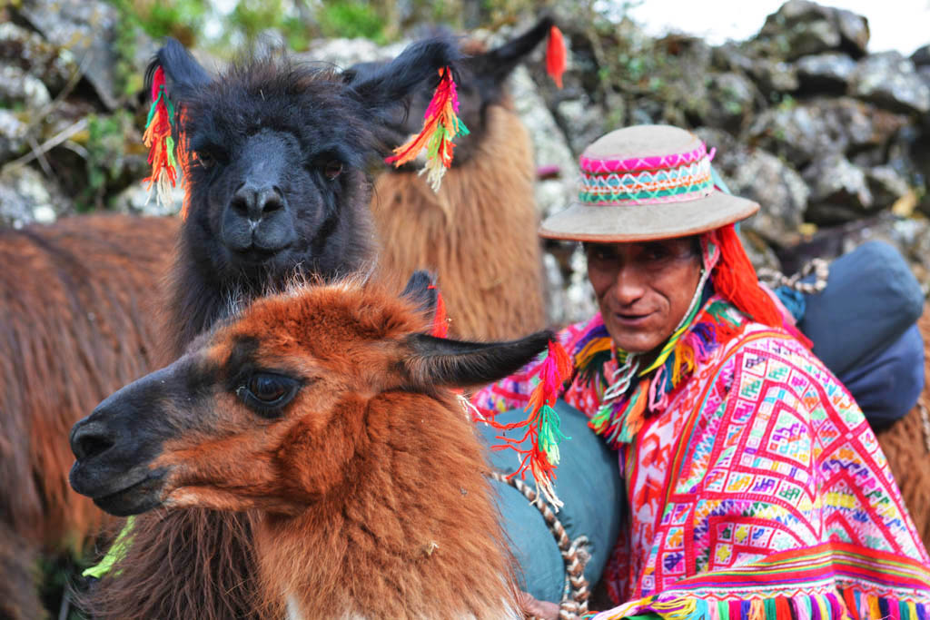 Leandro packs the llamas on lares trek