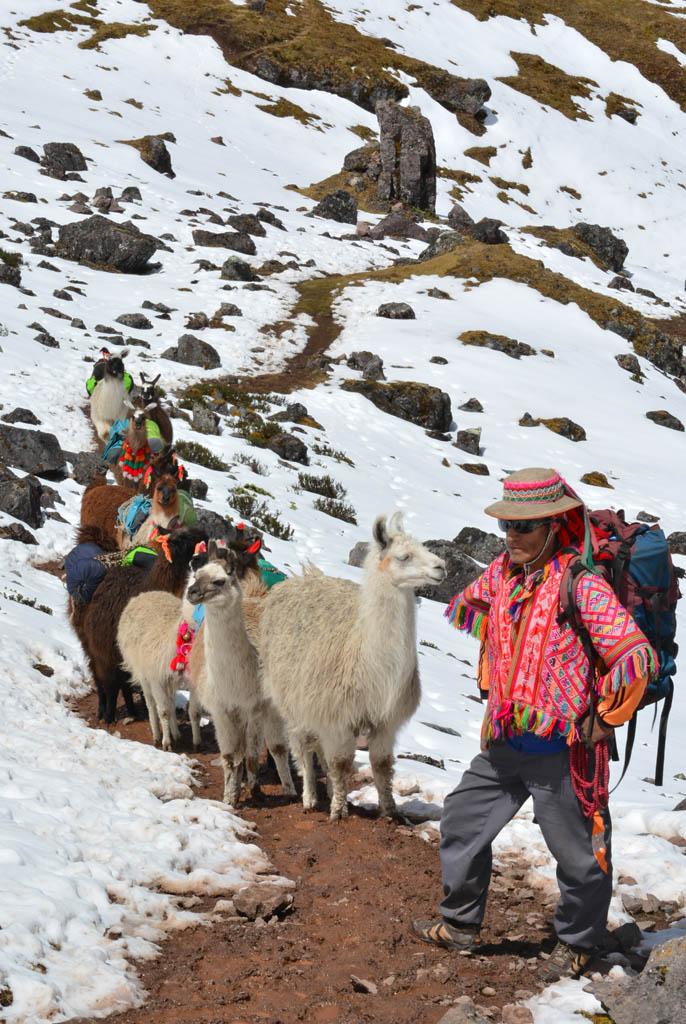 Leandro and llamas about half way to Condor Pass