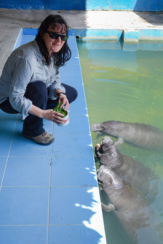 Sue feeding the manatees at the Manatee Rescue Centre in Iquitos