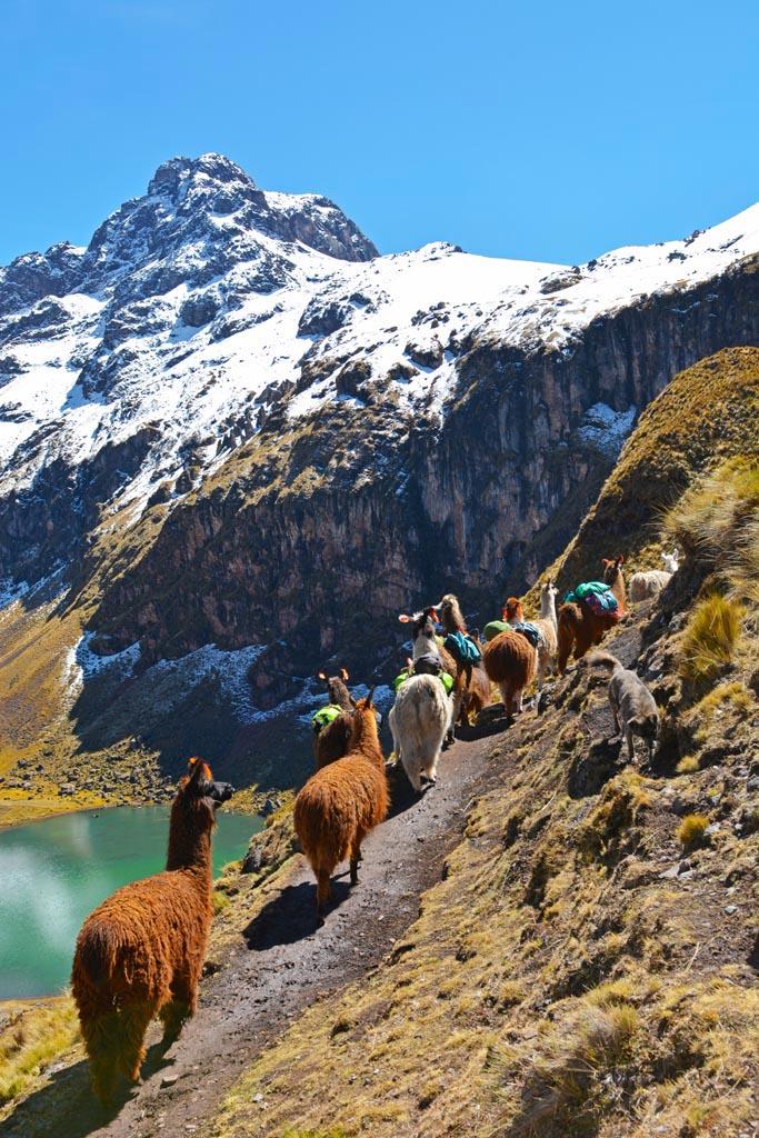 Our llamas on our trek