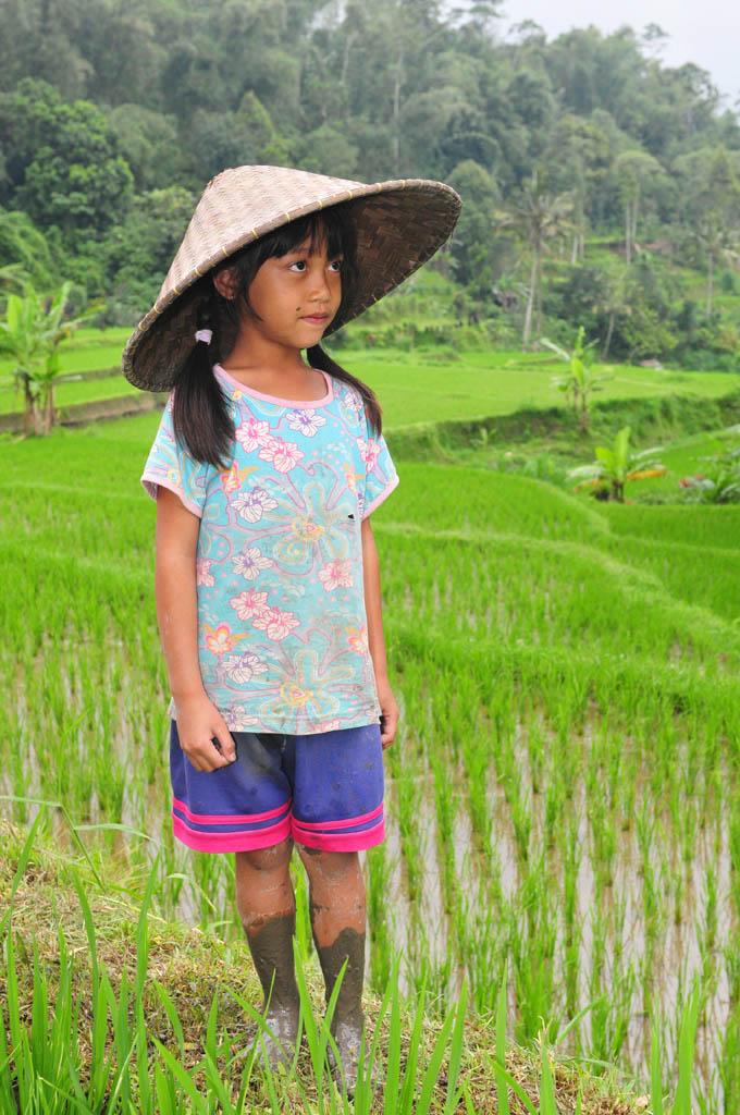 bali girl in the rice terraces