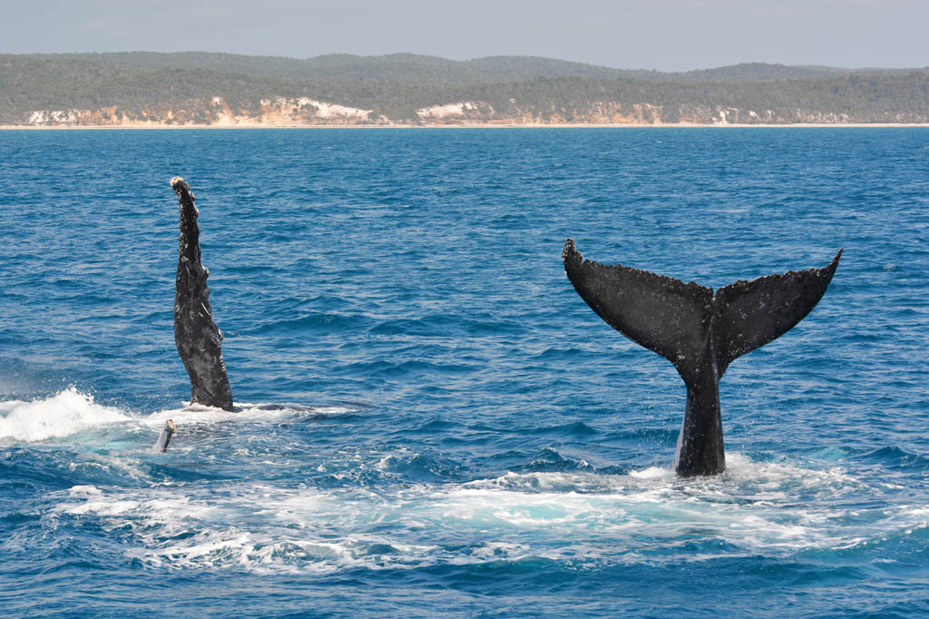 playful-whales