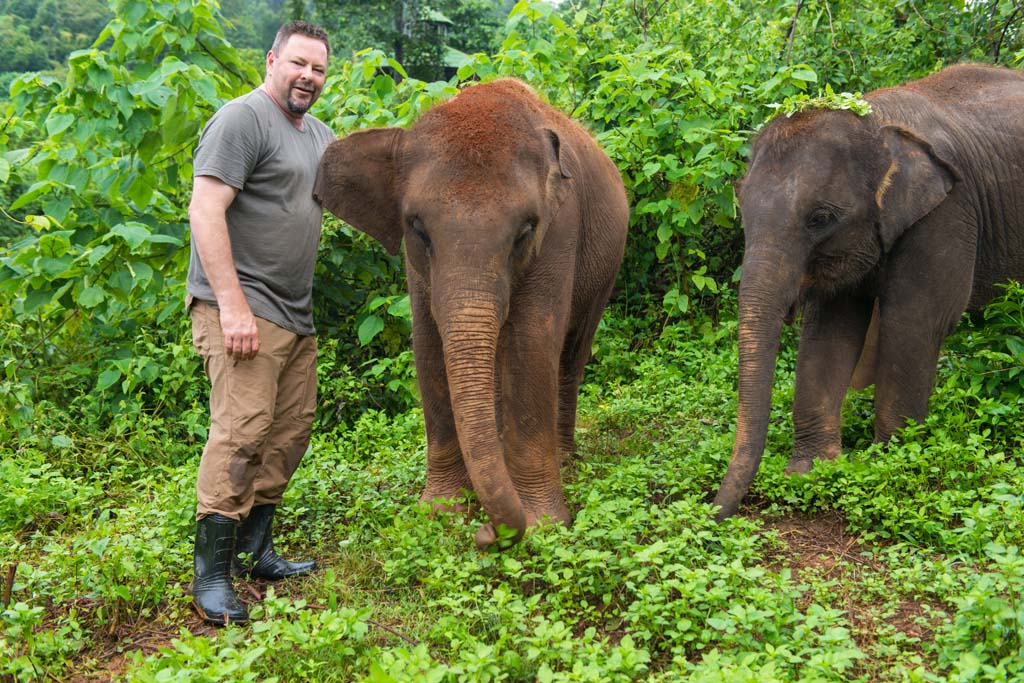 Elephant sanctuary baby elephants