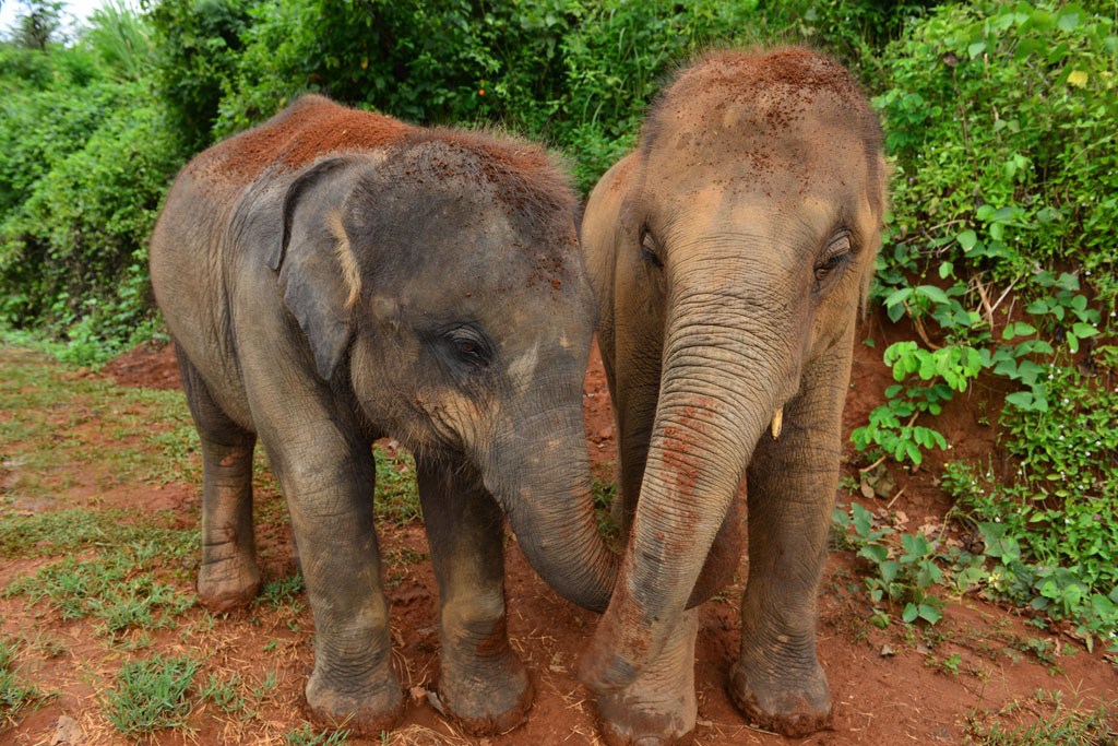 pailin-and-nam-choke-at-and-elephant-sanctuary-in-chiang-mai