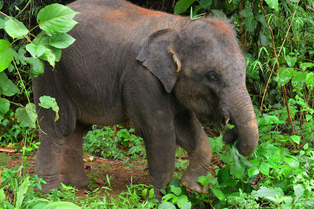 pailin-elephant-sanctuary-chiang-mai
