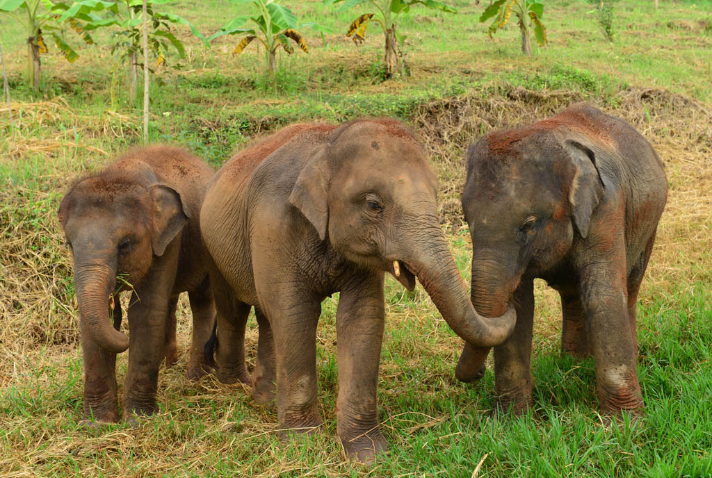 an-ethical-elephant-sanctuary-in-chiang-mai