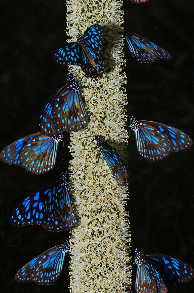 butterflies-on-the-walk