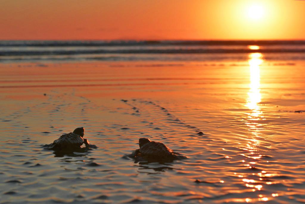 baby-turtles-at-deepwater