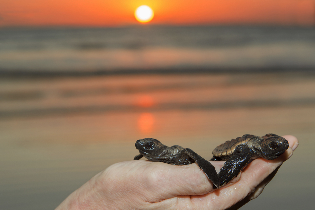 deepwater-national-park-baby-turtles