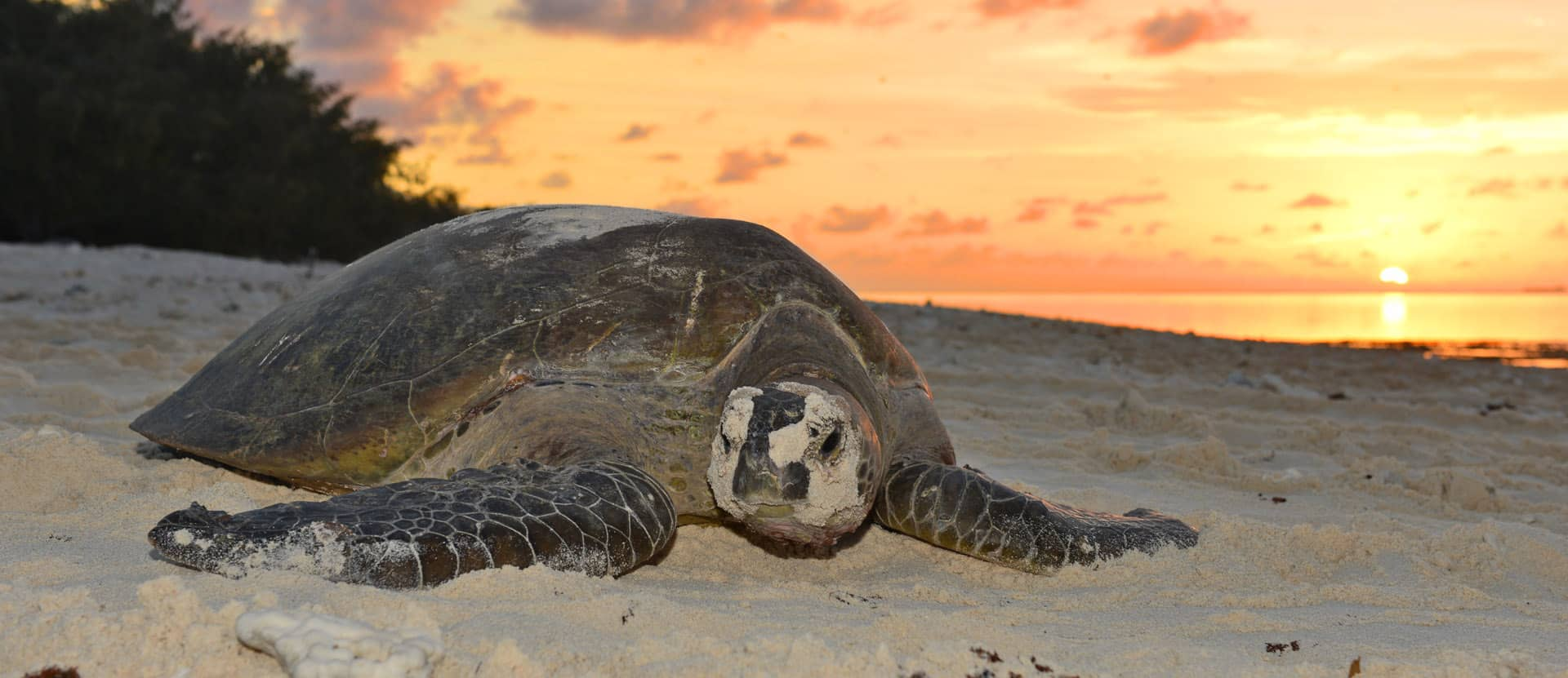 Lady Musgrave Island - Camping, Turtles, Seabirds and Snorkeling